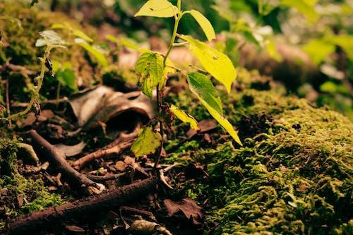 Fotobanka sbezplatnými fotkami na tému les, príroda