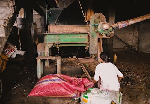 Základová fotografie zdarma na téma cereálie, frézka, kov, kukuřice