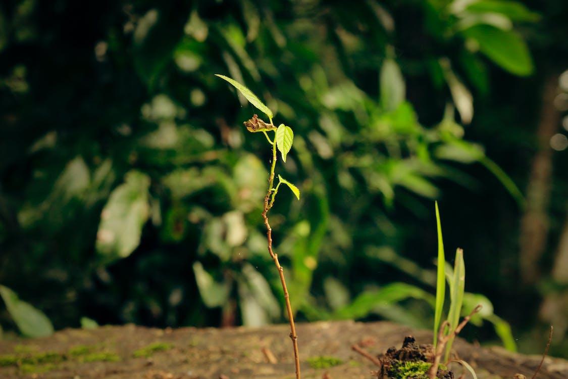 les, príroda