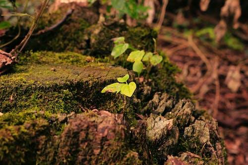 Fotobanka sbezplatnými fotkami na tému les, príroda, zelená
