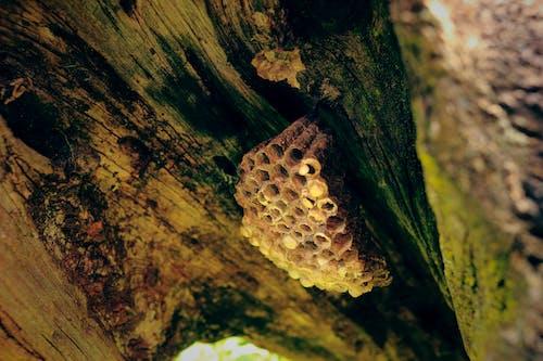Fotobanka sbezplatnými fotkami na tému príroda, úľ, včelí úľ