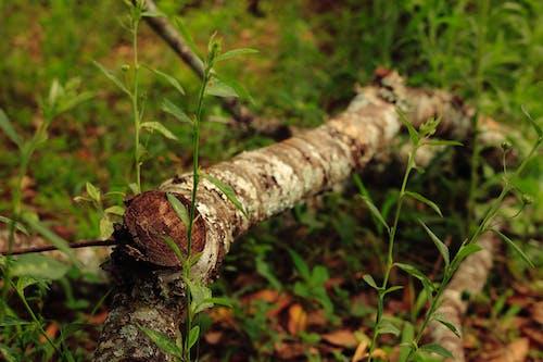 Fotobanka sbezplatnými fotkami na tému fotografia prírody, príroda, strom, tapeta smotívom prírody