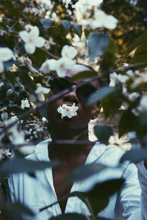Ảnh lưu trữ miễn phí về cánh hoa, chi nhánh, chụp ảnh, giống cái