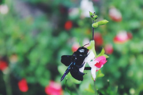 Free stock photo of beautiful flower, beauty in nature, bee, nature