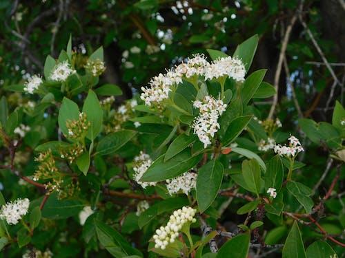 Ilmainen kuvapankkikuva tunnisteilla kukat pensaista