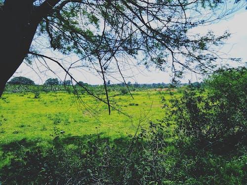 Fotos de stock gratuitas de arboles, campo verde, césped, descolorido