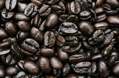 Imagine de stoc gratuită din boabă, brun, cafea, cofeină