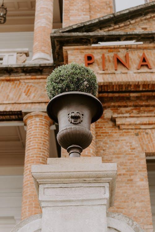 aslan, pinacoteca, Sao Paulo, sp içeren Ücretsiz stok fotoğraf