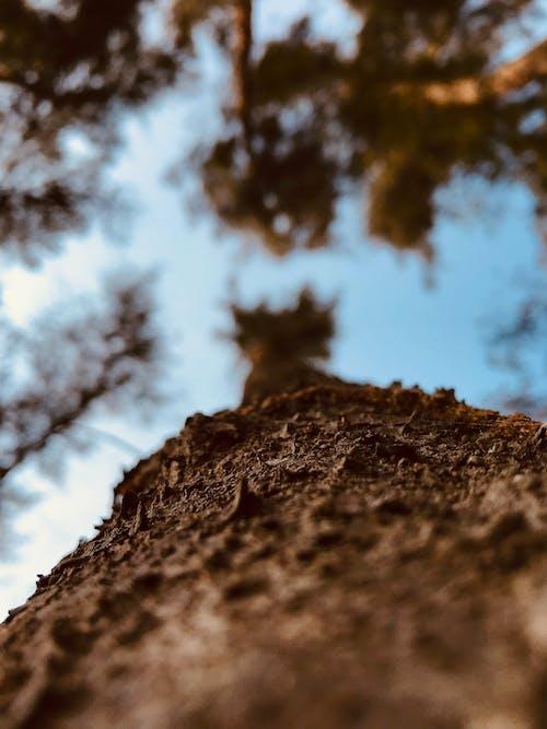 Immagine gratuita di bellezza nella natura, cielo azzurro, foglie autunnali, foresta