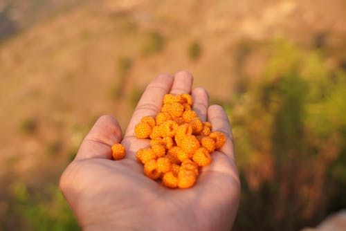 Close Up Photography  of Orange Berries  on Human Palm