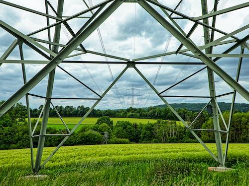 Fotos de stock gratuitas de arboles, cable de energía, campos, cielo gris