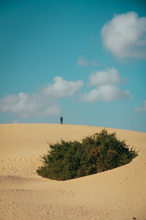 Gratis arkivbilde med alene, eventyr, natur, sand