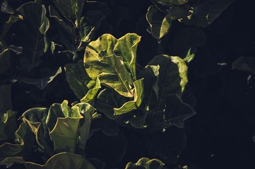 Photo of a green-leafed plant
