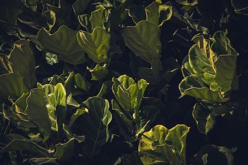 Základová fotografie zdarma na téma čerstvá zelenina, listnaté, syrový, zdravý