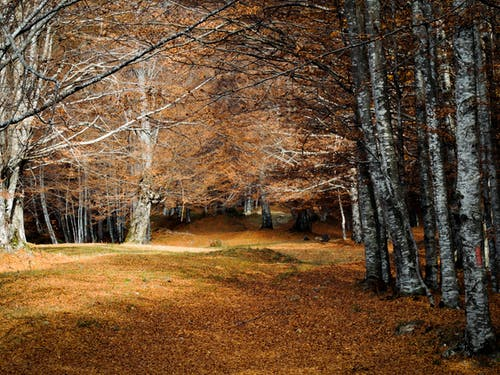 Fotobanka sbezplatnými fotkami na tému jeseň, les, lesy, malebný