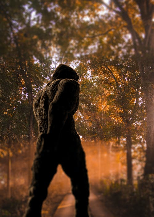 Free stock photo of bigfoot, sasquatch