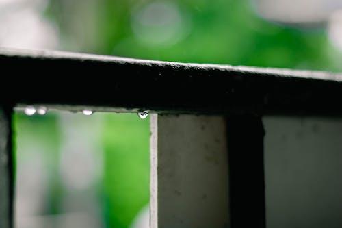 Fotobanka sbezplatnými fotkami na tému kvapka dažďa, po daždi