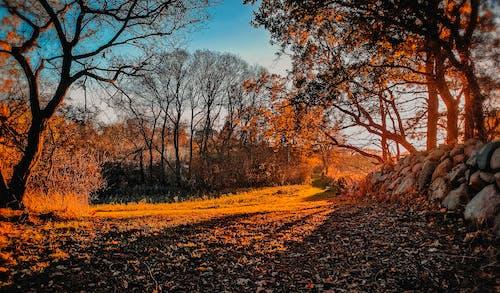 Δωρεάν στοκ φωτογραφιών με αυγή, δέντρα, εποχή, περιβάλλον