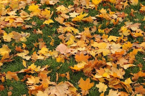 Fotobanka sbezplatnými fotkami na tému jeseň, jesenné lístie, list, listy