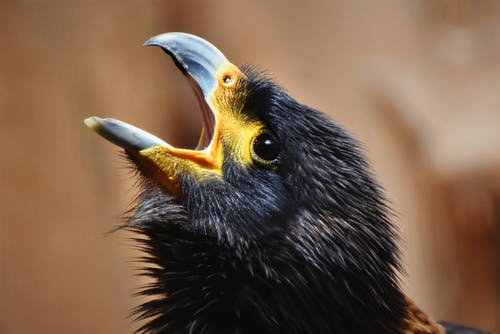 คลังภาพถ่ายฟรี ของ จงอย, นก, นกล่าเหยื่อ, อีแร้ง
