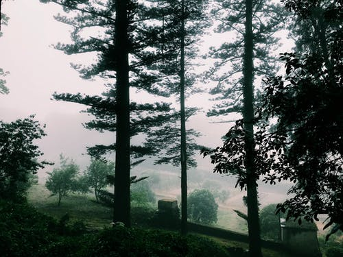Landscape Photo of Trees With Fog