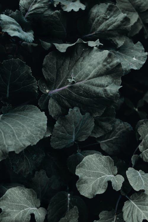 ackerland, blühen, frische