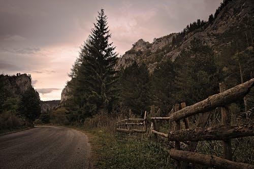 Δωρεάν στοκ φωτογραφιών με άδειο δρόμο, βουνό, δέντρα, έξω