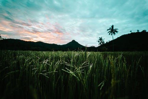 Fotobanka sbezplatnými fotkami na tému hracie pole, krajina, orná pôda, plodiny