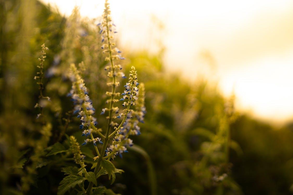 Foto Borrosa De Flores Azules Bluster