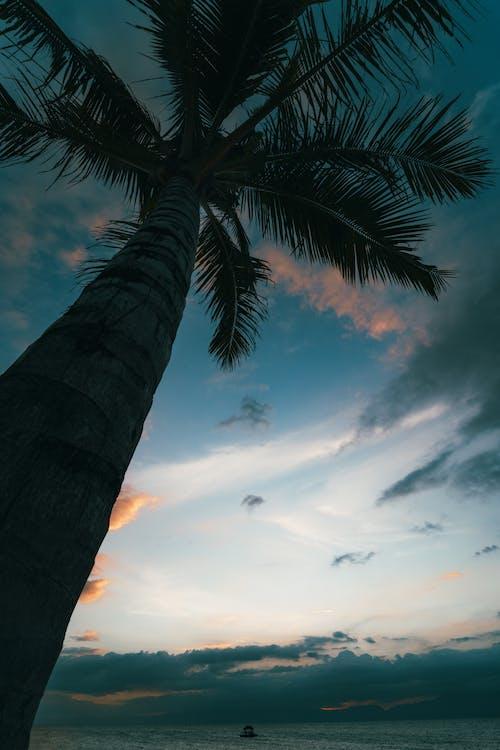 Fotobanka sbezplatnými fotkami na tému kokosová palma, krajina pri mori, more, nízkouhlá fotografia
