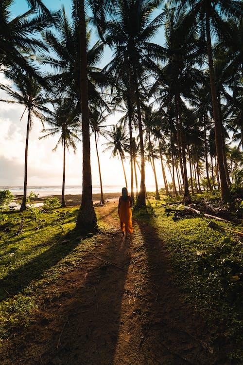 Ilmainen kuvapankkikuva tunnisteilla aamu, auringonlasku, auringonnousu, kävely
