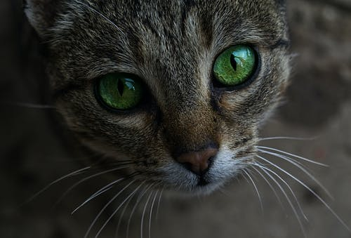Gratis arkivbilde med grønne øyne, huskatt, huslig, katt