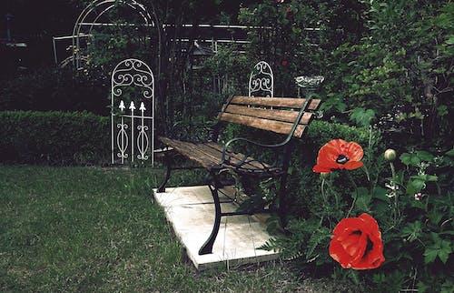 Ilmainen kuvapankkikuva tunnisteilla istuin, kukat, kukkiva puutarha, luonto