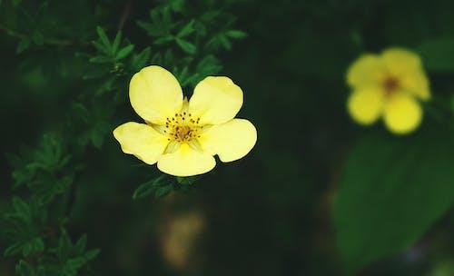 Ilmainen kuvapankkikuva tunnisteilla kasvikunta, keltainen kukka, kukat, kukikas
