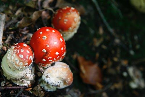 地面, 天性, 性質, 毒菌 的 免费素材照片