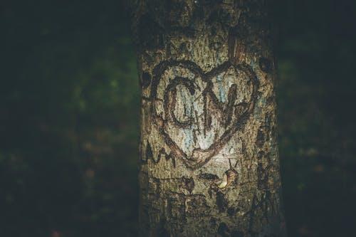 Fotobanka sbezplatnými fotkami na tému vyrezávané srdce na strome
