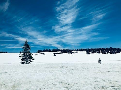Immagine gratuita di neve
