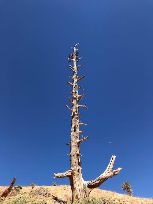 Immagine gratuita di albero, albero della morte, cielo azzurro, morte