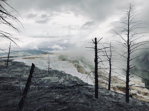 Immagine gratuita di albero, fumare, geyser, morte