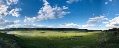 Immagine gratuita di foresta, paesaggio, panorama, pianure