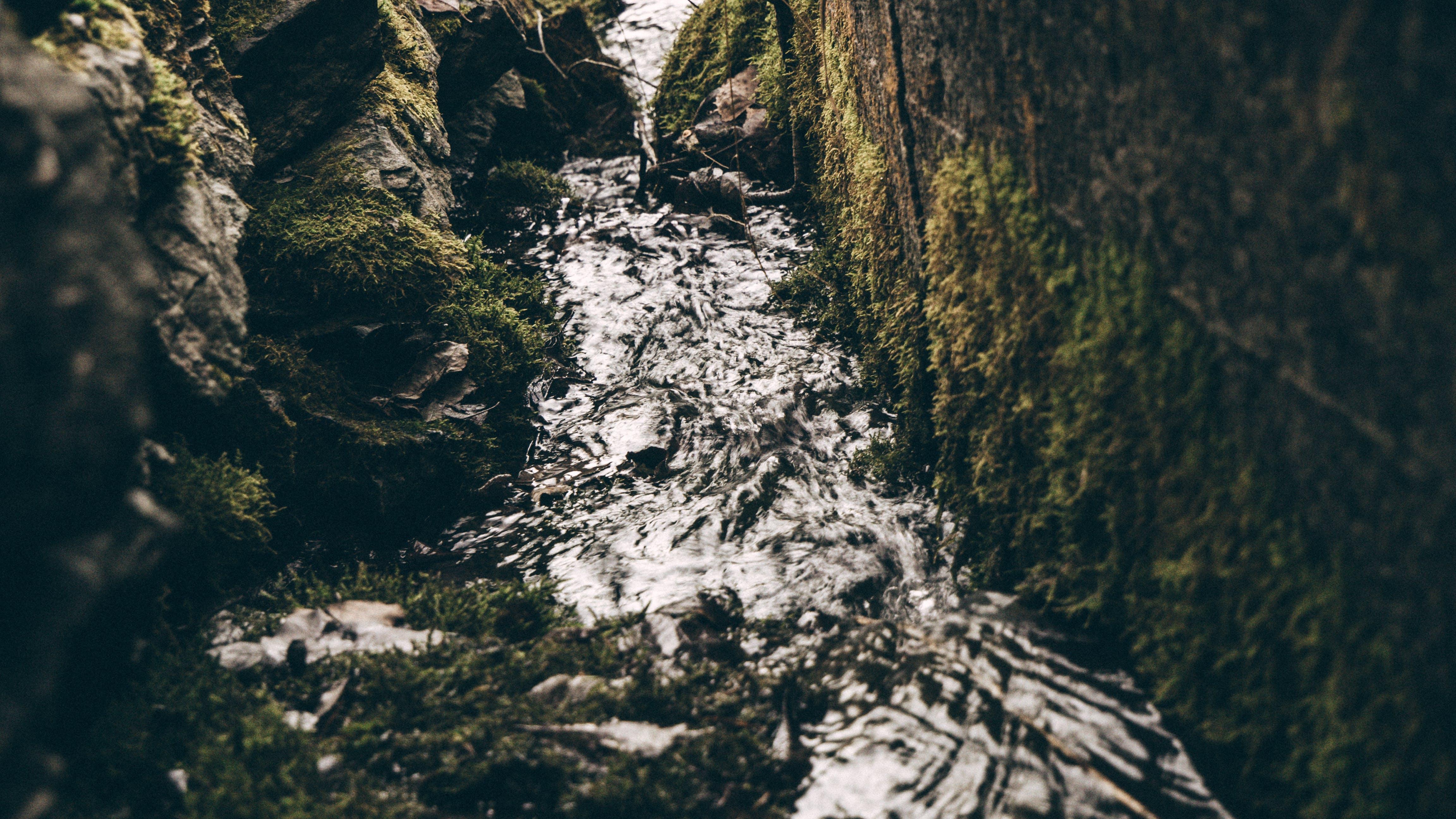 Gratis lagerfoto af å, sten, vand