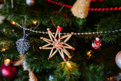 Imagine de stoc gratuită din agățat, brad de crăciun, celebrare, Crăciun
