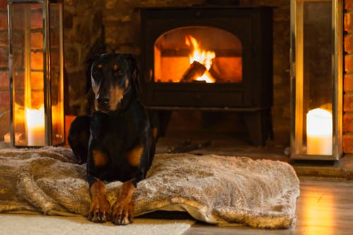 Free stock photo of #doberman, #dog, #fireplace