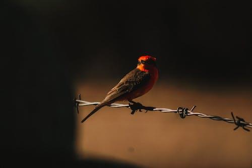 Foto stok gratis bagus, bangsa burung, bertengger, binatang
