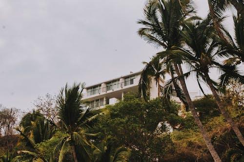 Immagine gratuita di alberi, architettura, balconi, bianco