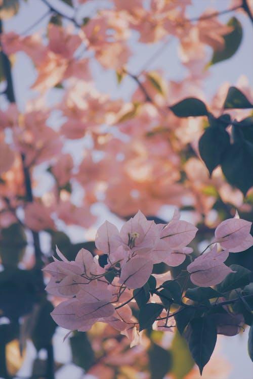 Immagine gratuita di #white #colore #mood #fall #winter #flower #summer