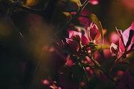 light, flowers, summer