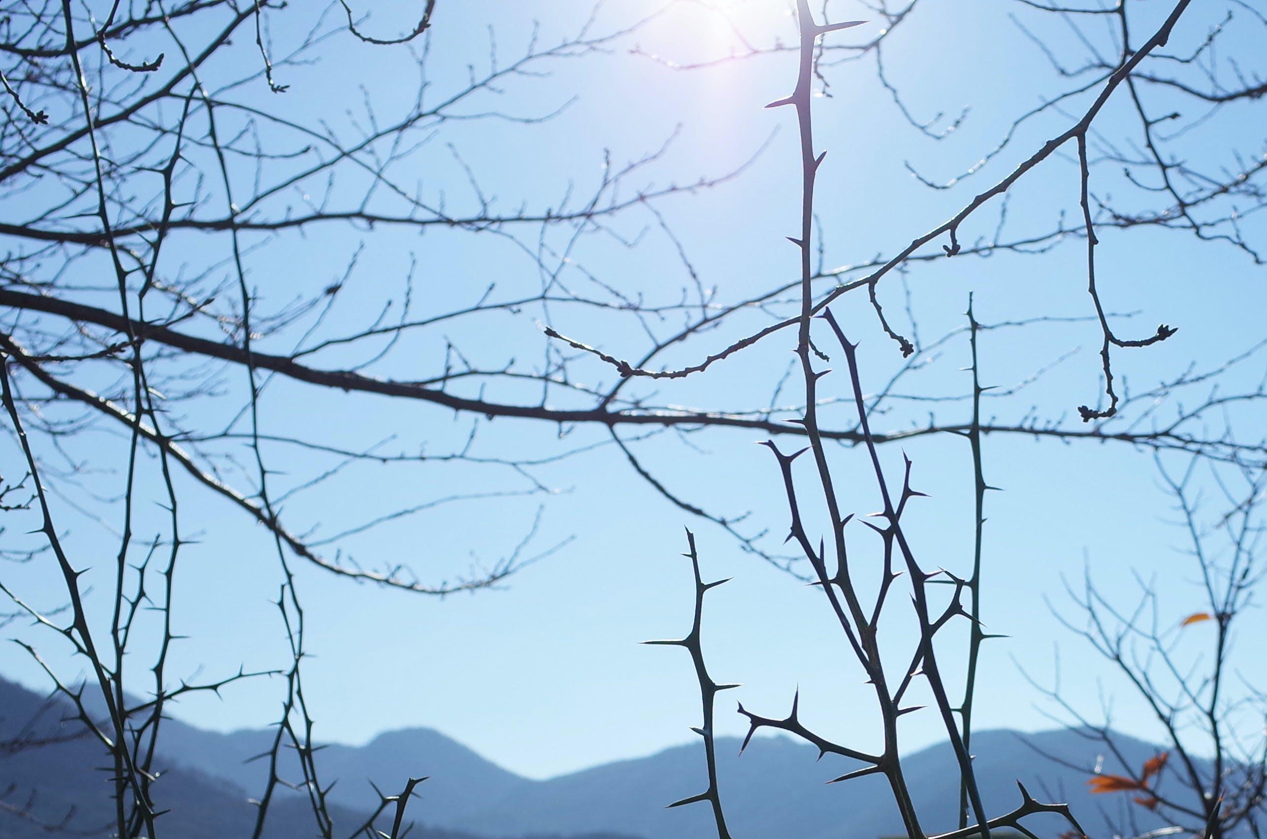 Kostenloses Stock Foto zu blauer himmel, dornenbusch, sonnenlicht