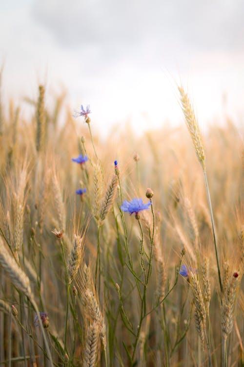농지, 농촌의, 들판, 시골의 무료 스톡 사진