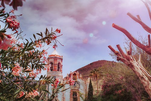 Gratis lagerfoto af arkitektur, blomster, bygning, campana